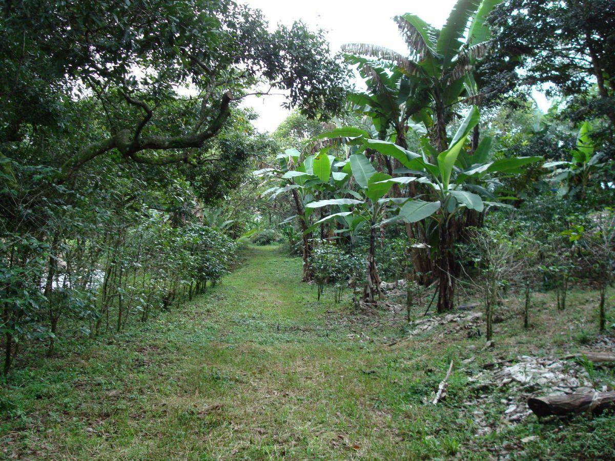 Costa Rica 541