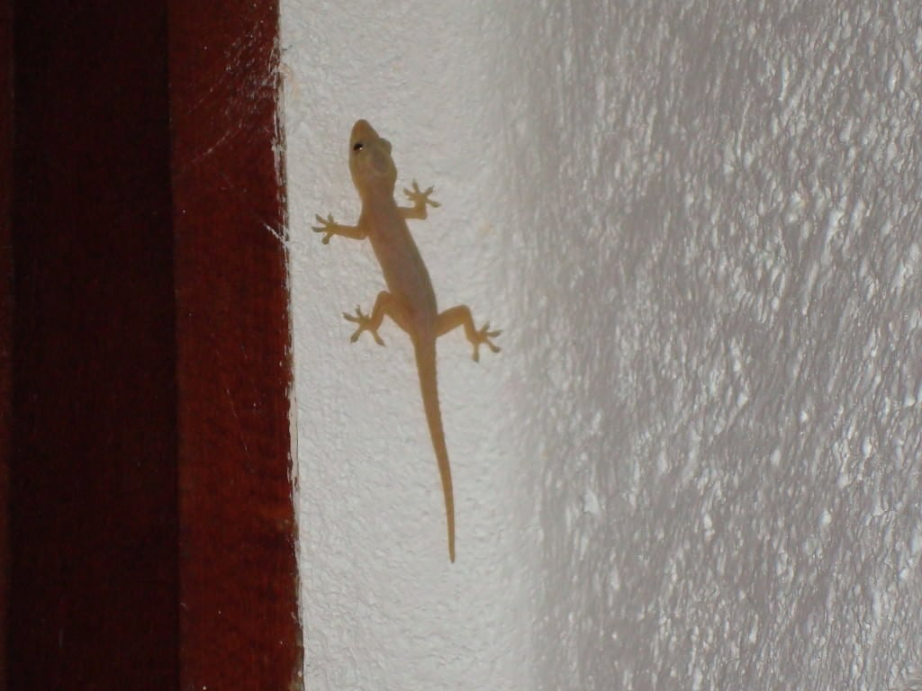 gecko Tulum beach bungalow