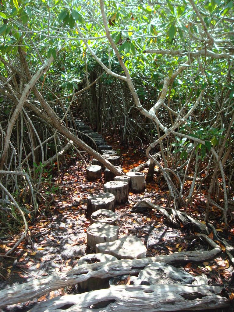 Sian Ka'an Biosphere Cenote