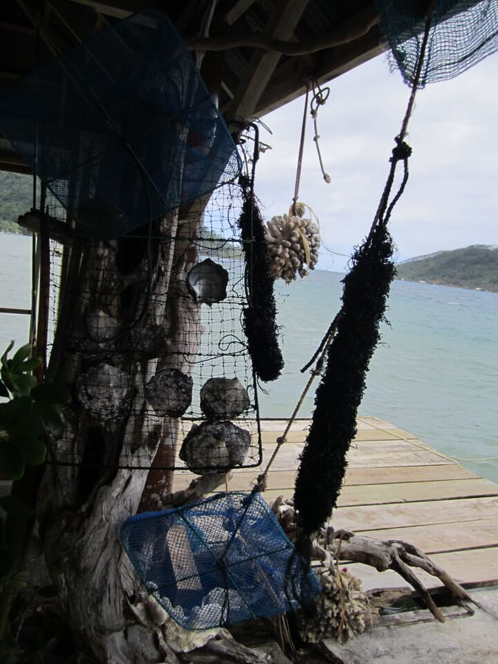 Black pearl farm on Tahaa