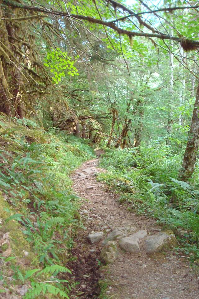 Lover's Lane Trail, Olympic National Park