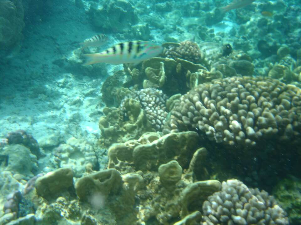Snorkeling in the Tahaa coral gardens, Tahiti
