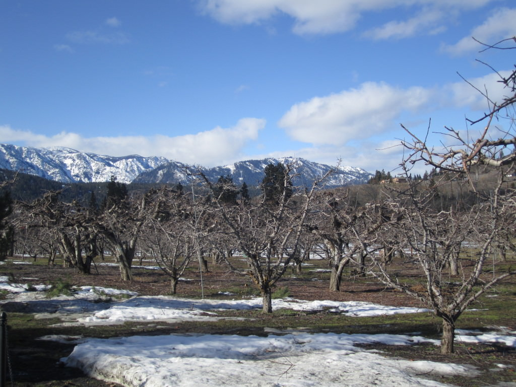 Winter wine tasting in Leavenworth--Wedge Mountain Winery