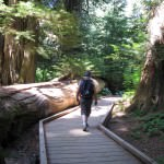 Grove of the Patriarchs Trail Mt Rainier National Park