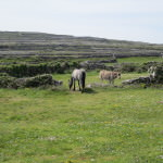 Inishmore Aran Islands Ireland