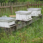Honeybee farming Latta Plantation