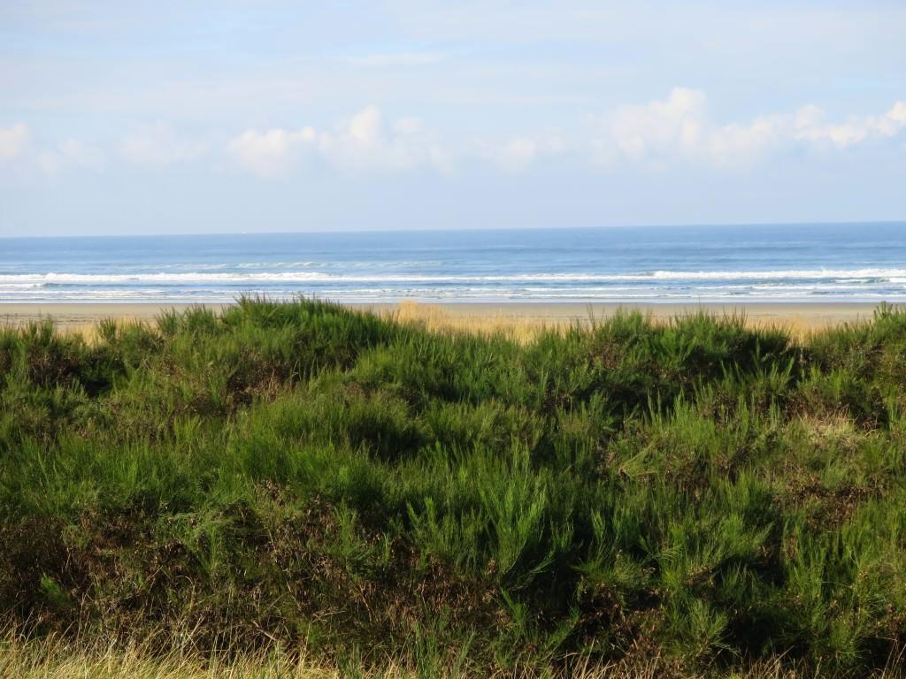 Grayland Beach WA (12)