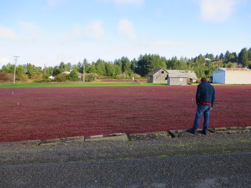 Grayland Cranberry Harvest Festival