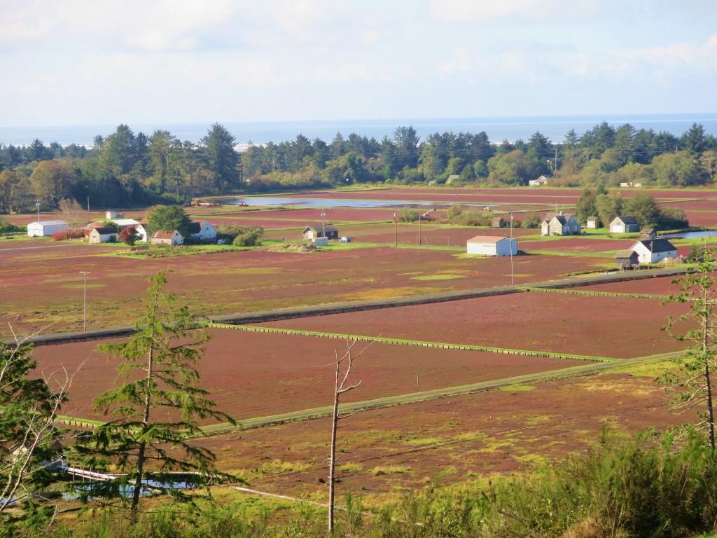 Grayland cranberry bogs
