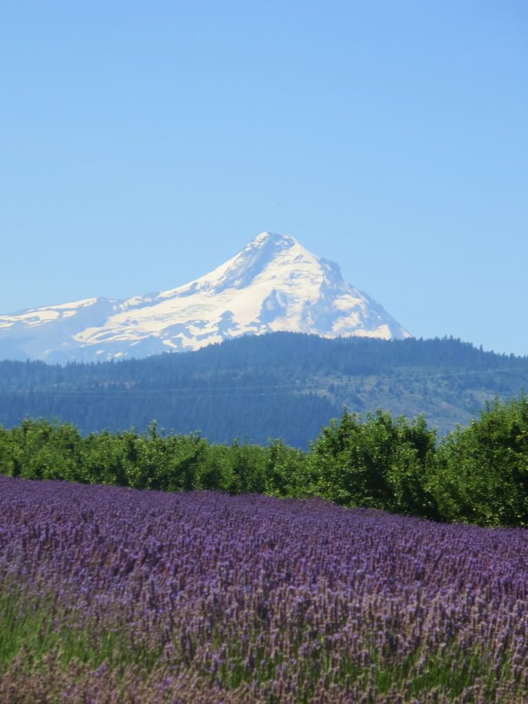 Mount Hood, Lavender Valley, Hood River, Oregon