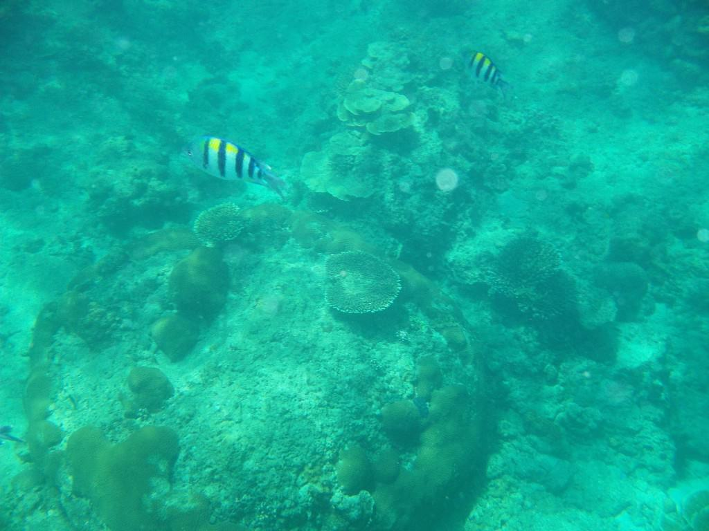 snorkeling koh phi phi Thailand 049
