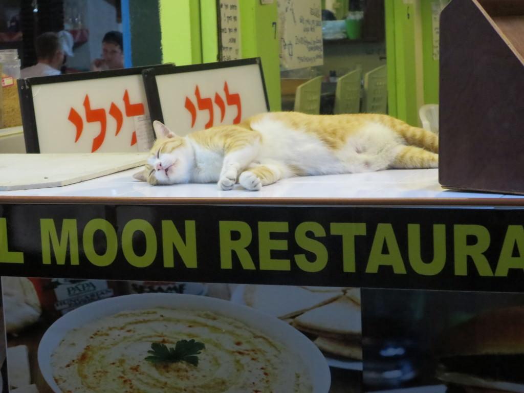 cat at restaurant Phi Phi Island Thailand 453
