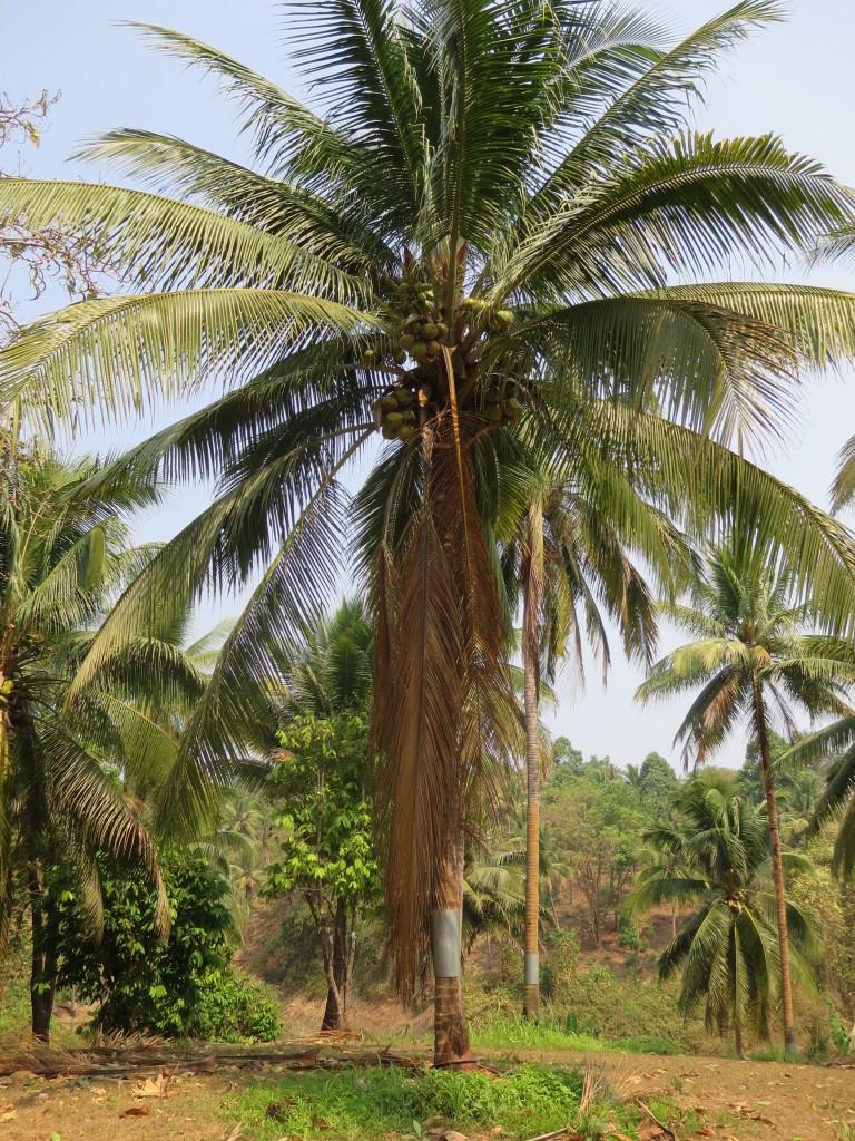 coconut island floating lake house safari Thailand