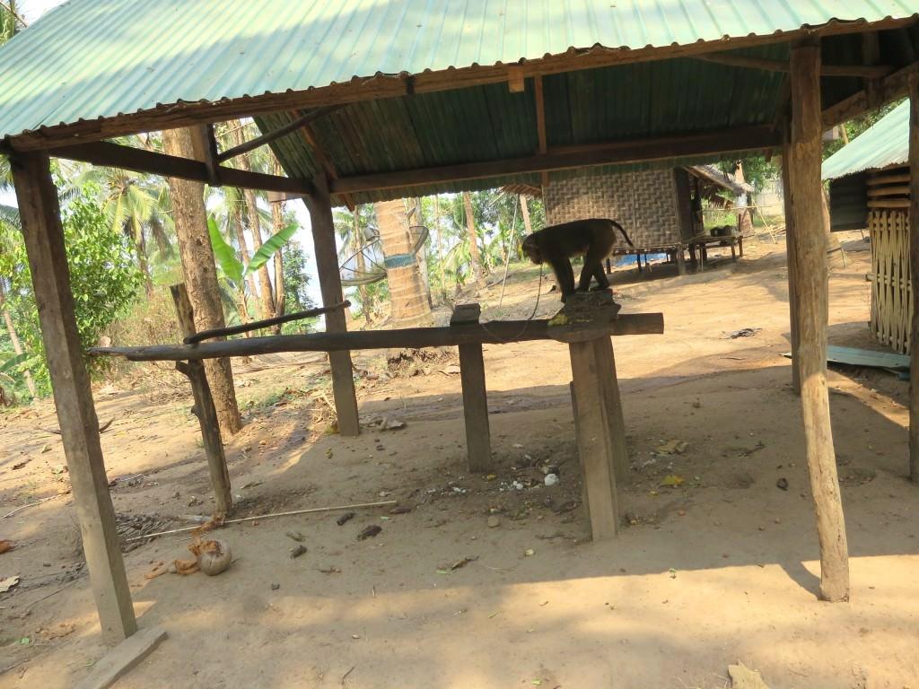 coconut monkey floating lake house safari Thailand
