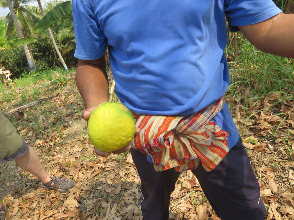 giant limes Thailand 801