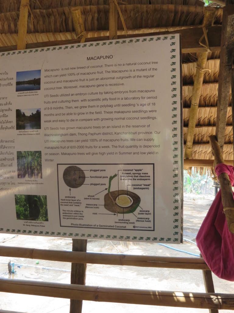 macapuno coconut plantation Thailand