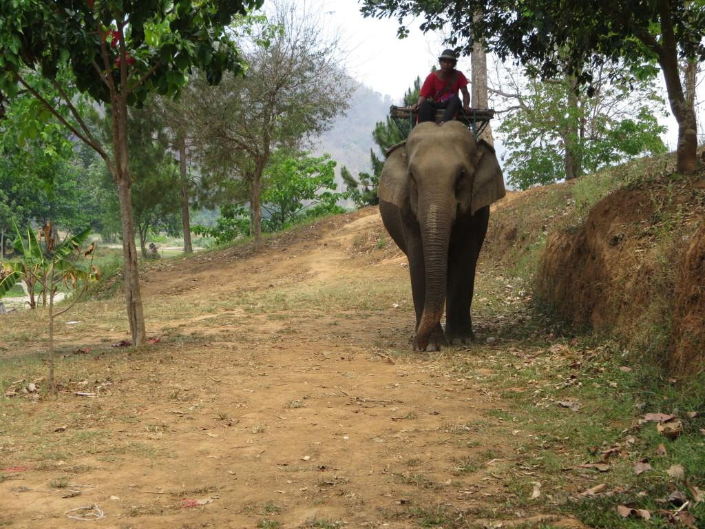 Elephant camp, Thailand 889