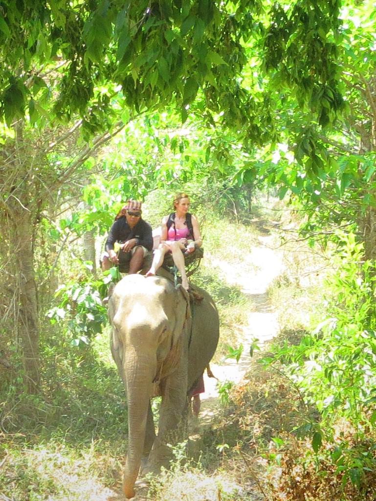 elephants in Thailand 924