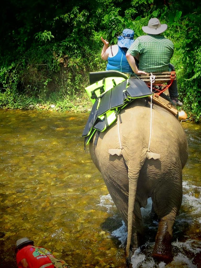 elephants in Thailand 936