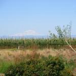 Mt Adams Rattlesnake Hills Yakima Valley