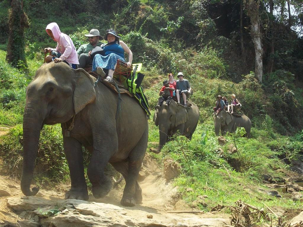 elephants in Thailand 134