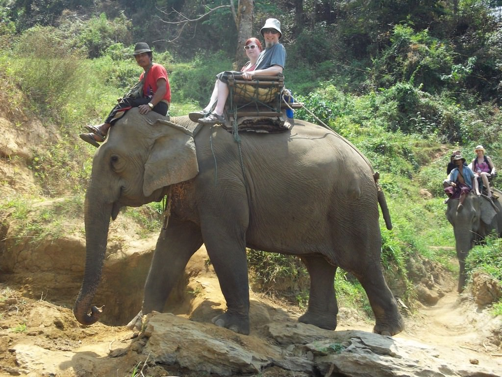 elephants in Thailand 137