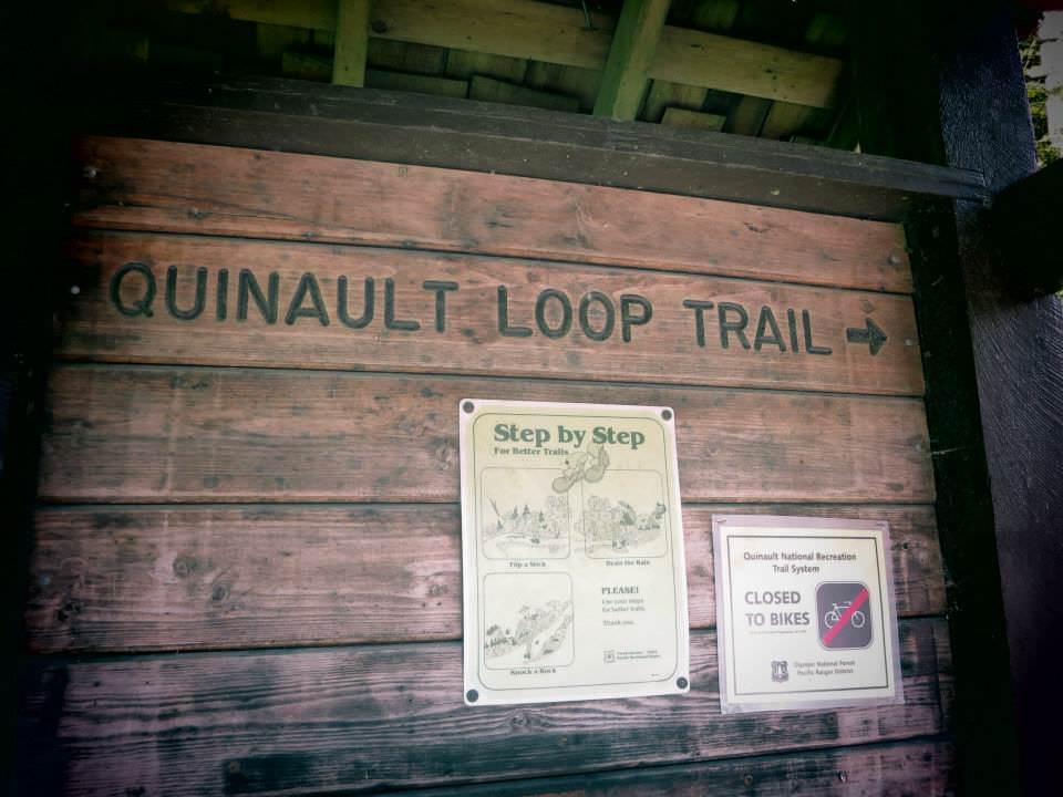 Lake Quinault loop trail