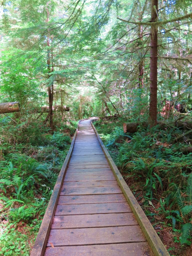 Lake Quinault loop trail cedar bog