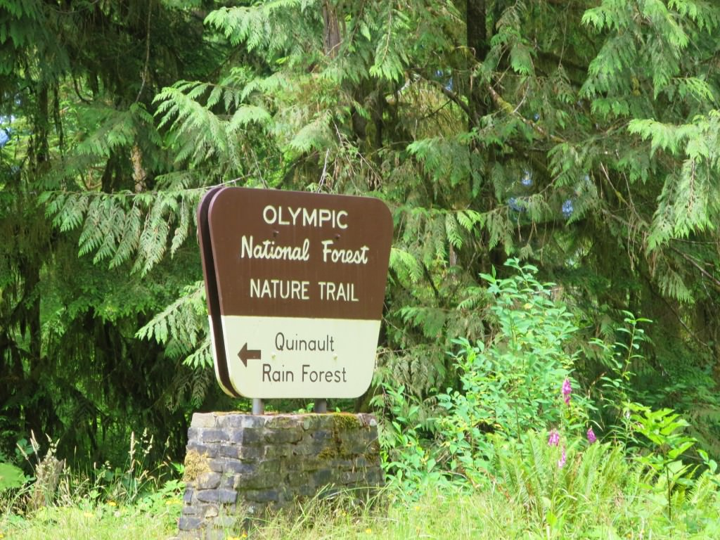 Quinault rain forest WA