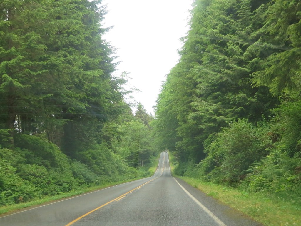 Highway 101 North Olympic Forest