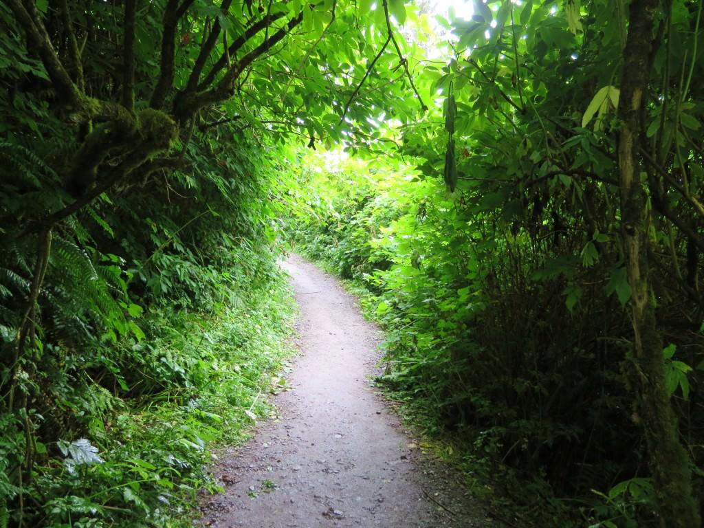 Beach trail to Ruby Beach WA