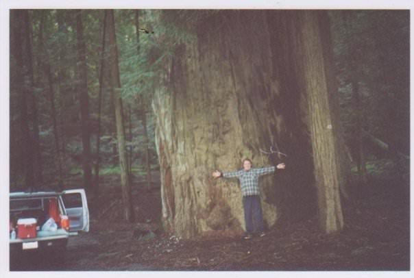 Redwoods National Park road trip