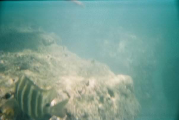 Bad disposable camera photo, Hawaii 2007