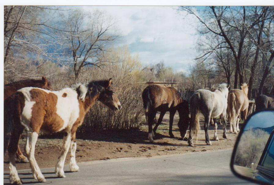 Horses on the road Taos, New Mexico