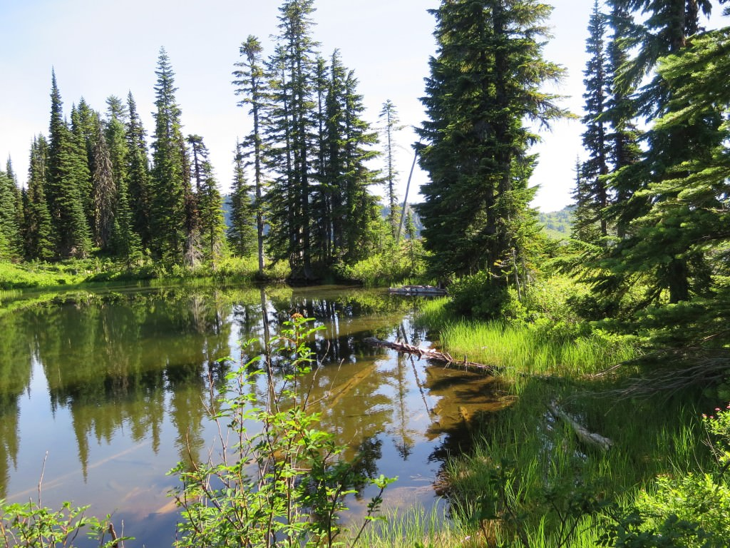 High Lakes Loop Trail Fairy Pond Mt Rainier