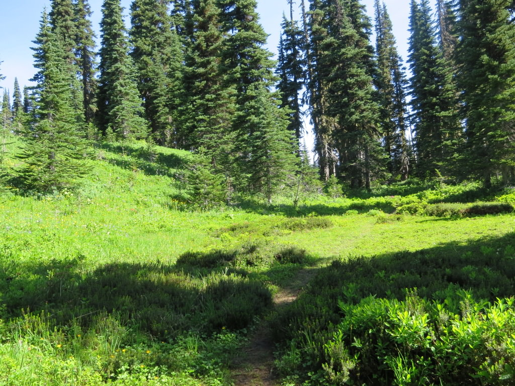 High Lakes Loop Trail Mt Rainier