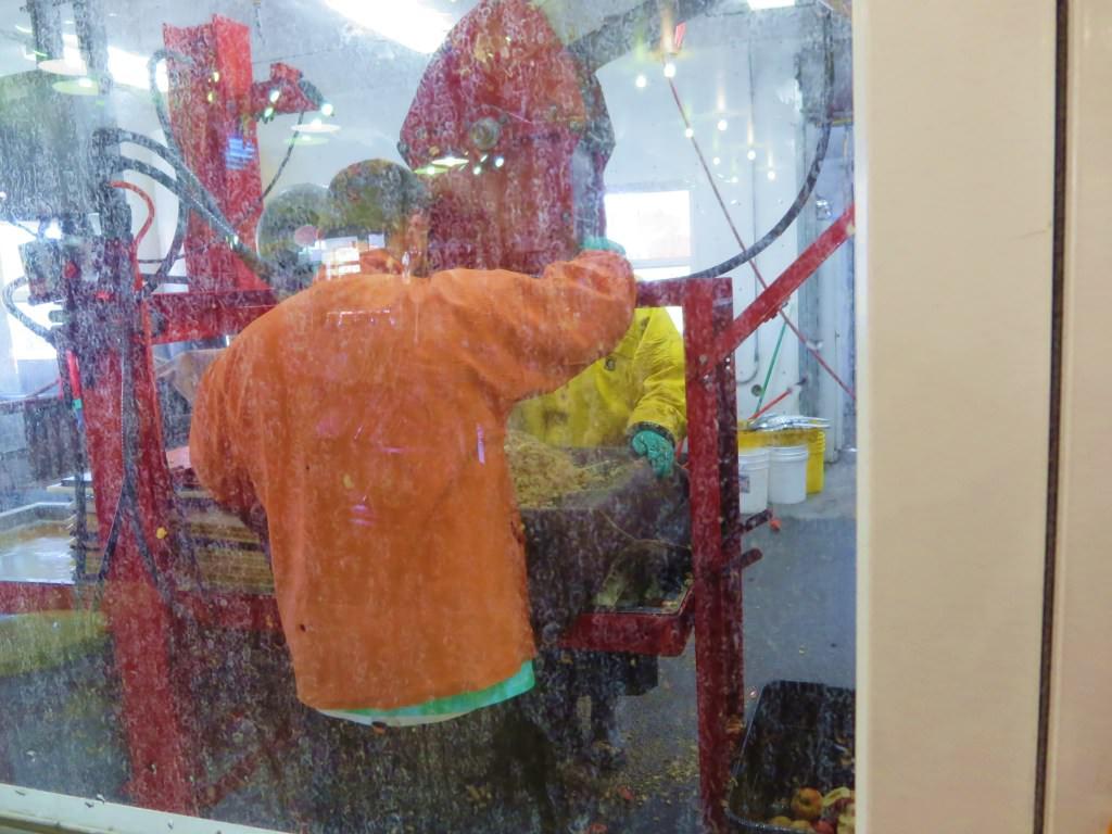 Getting ground apples ready to press Orondo Cider Works Chelan WA