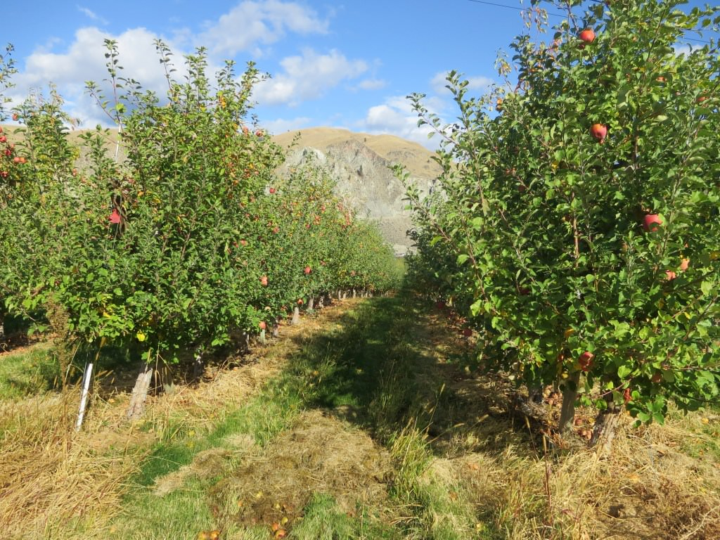 Chelan Crush Orondo Cider Works apple orchards