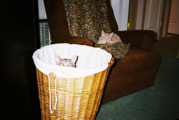 kittens Gonzo and Finnigan
