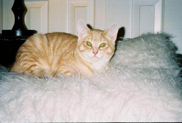 baby Finnigan kitten