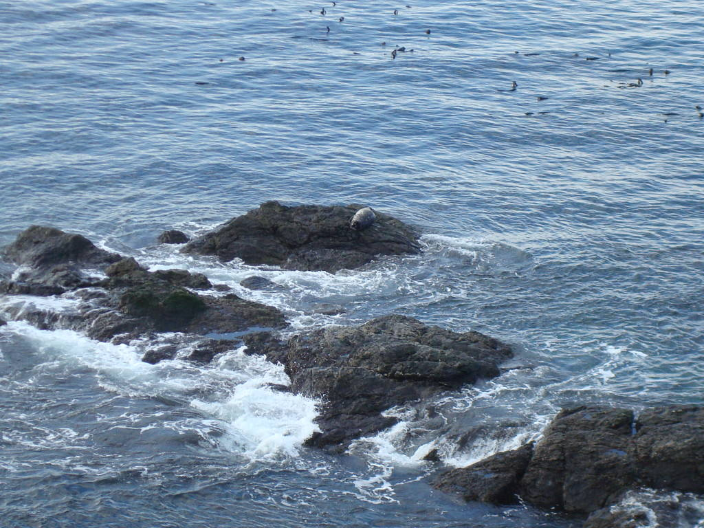 Seals at American Camp San Juan Island