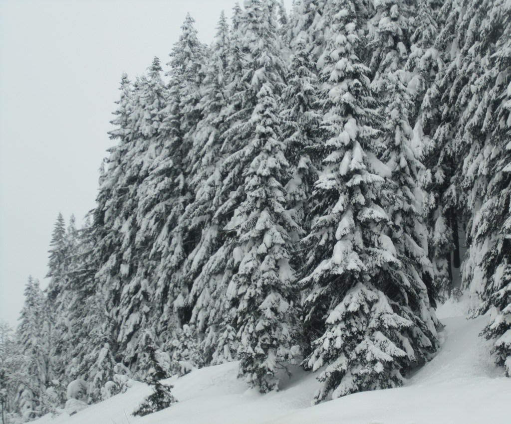 Snoqualmie Pass winter wonderland