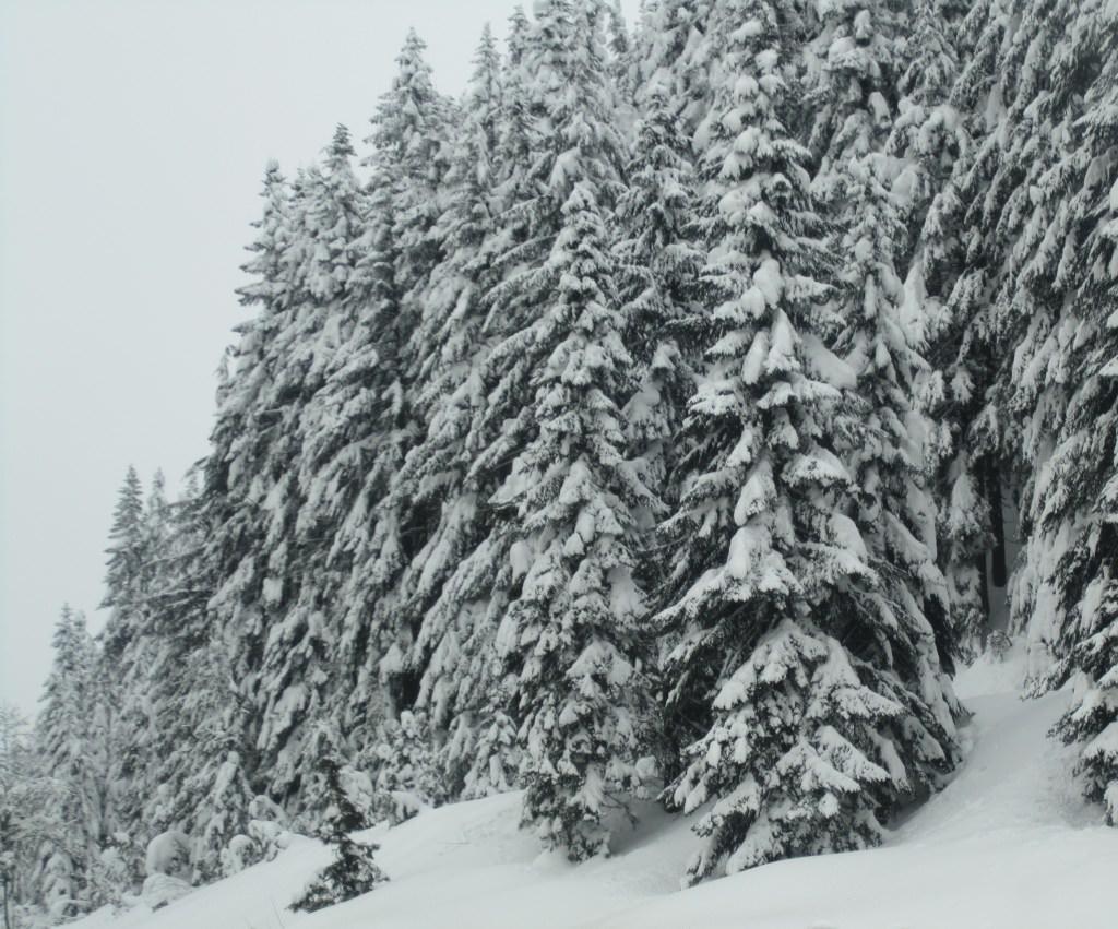 Snoqualmie Pass winter wonderland