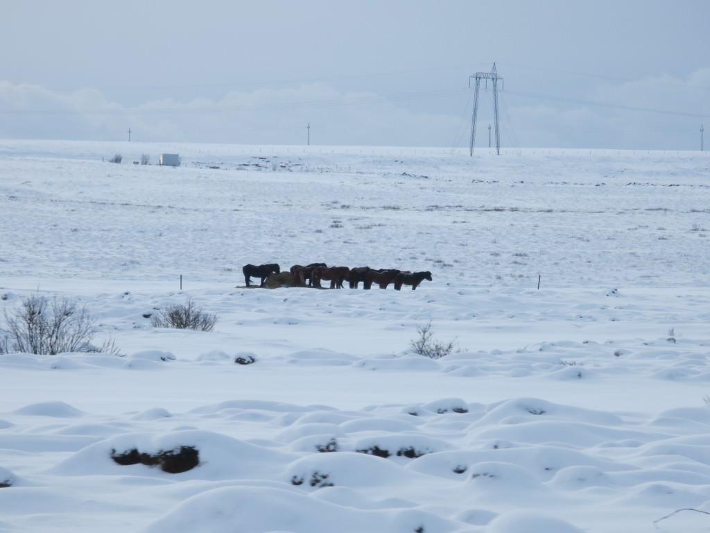 Iceland 173