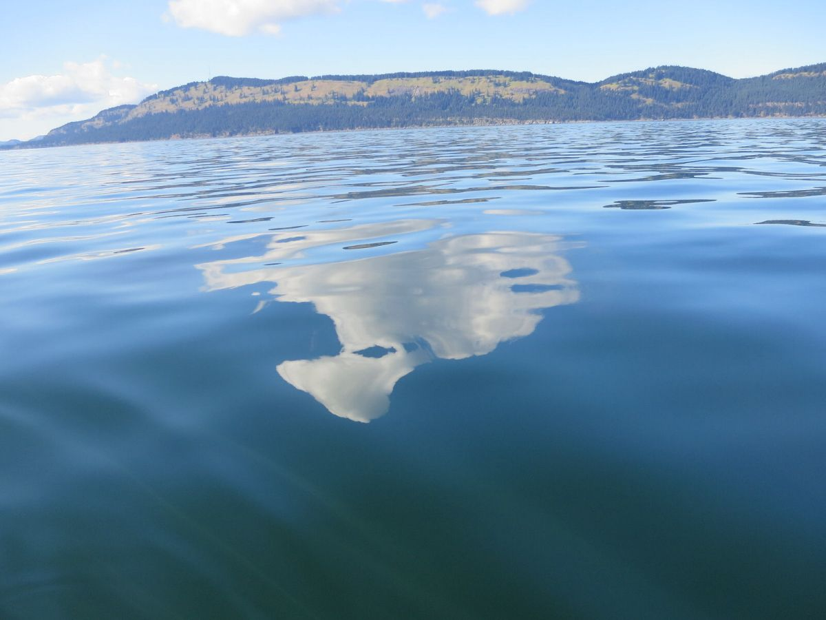 Celebrity reflection san juan excursions whale