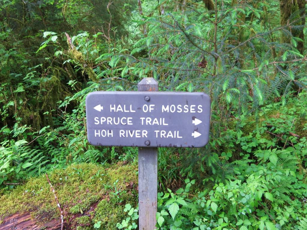 Hoh Rainforest Trails