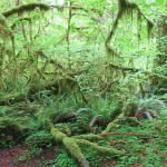 The Olympic National Park 2015: Hoh Rainforest
