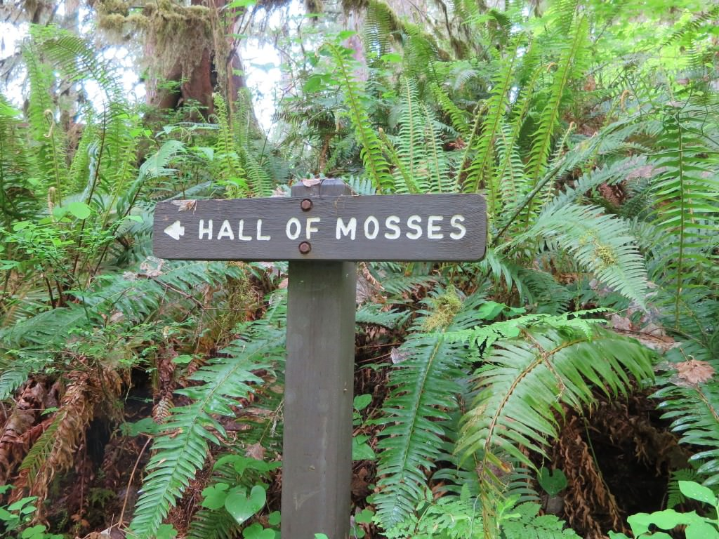 Hall of Mosses Hoh Rainforest