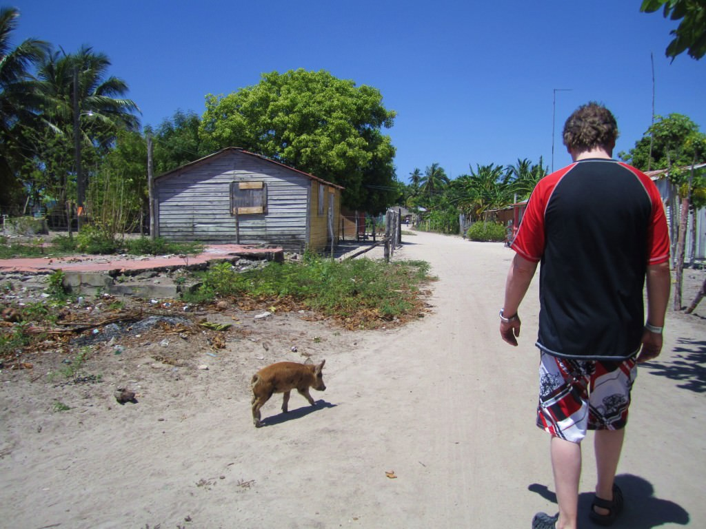Paddy and the piglet, Mano Juan, Isla Saona
