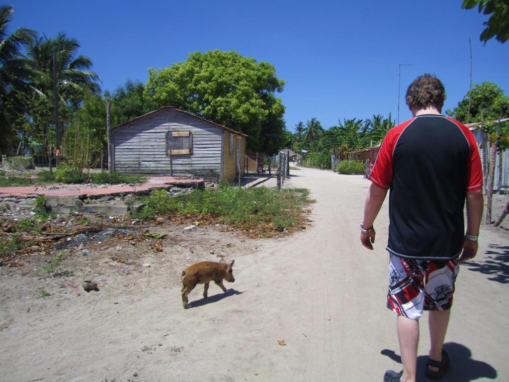 Paddy and the piglet, Mano Juan, Isla Saona
